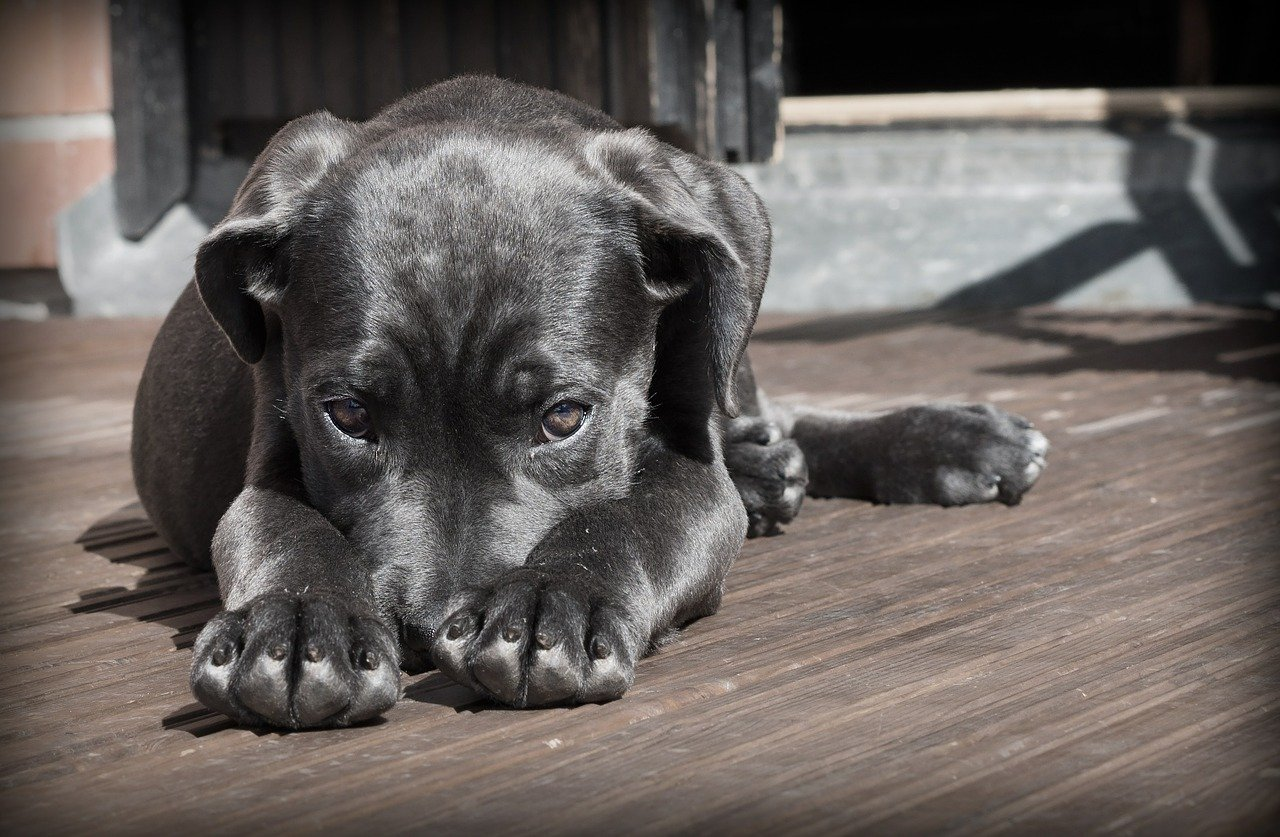 Czy katar u szczeniaka jest niebezpieczny?