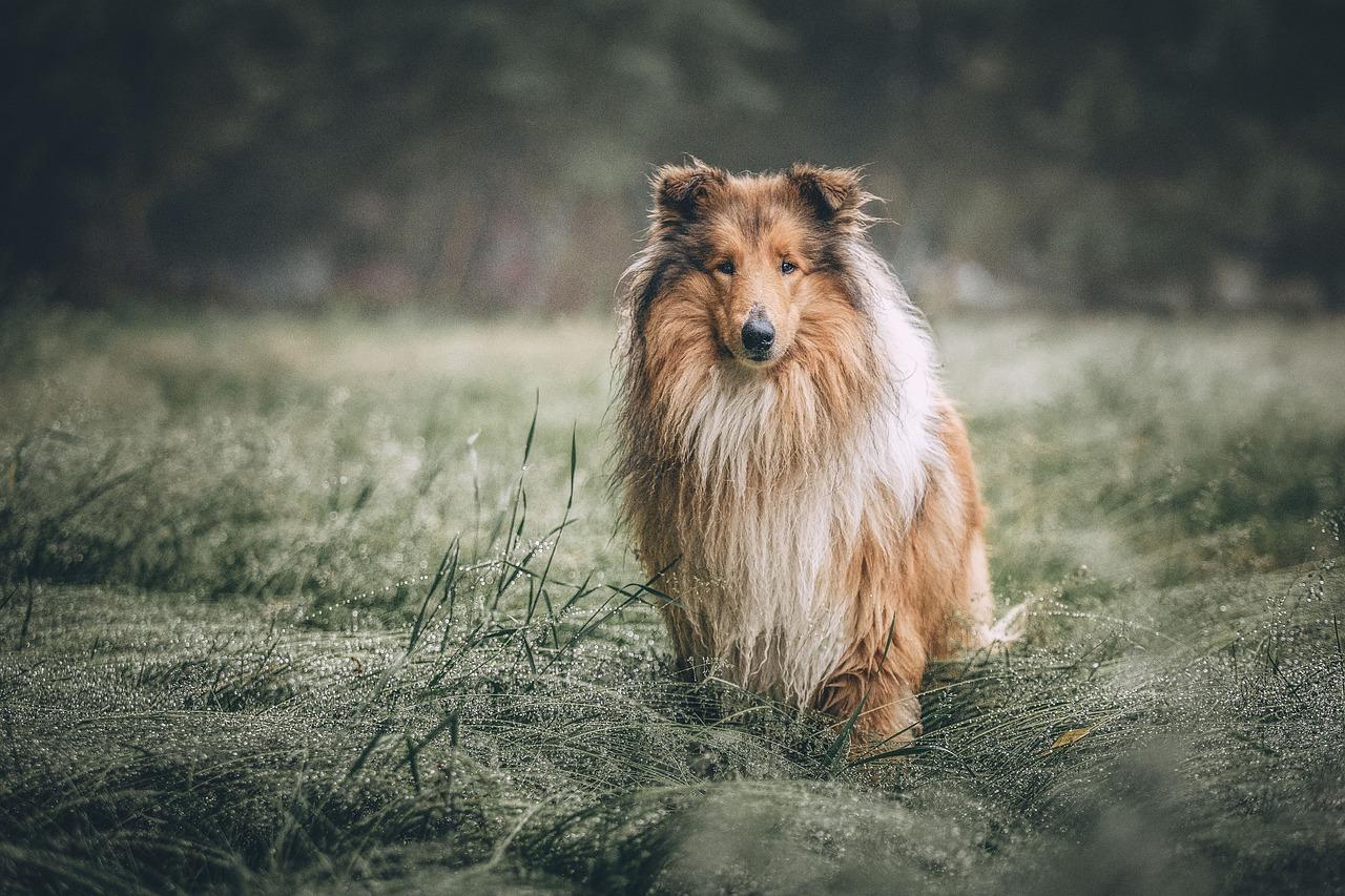 Nowe rasy psów – czy już o nich słyszałeś?
