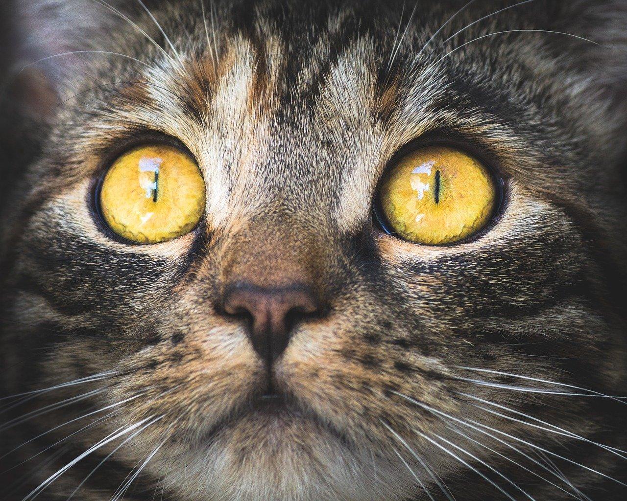 Ciąża a kot w domu – jak bardzo ryzykujesz?