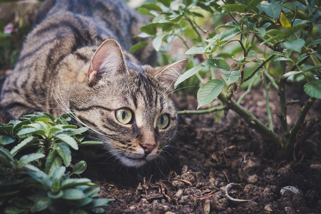 Rośliny odstraszające koty