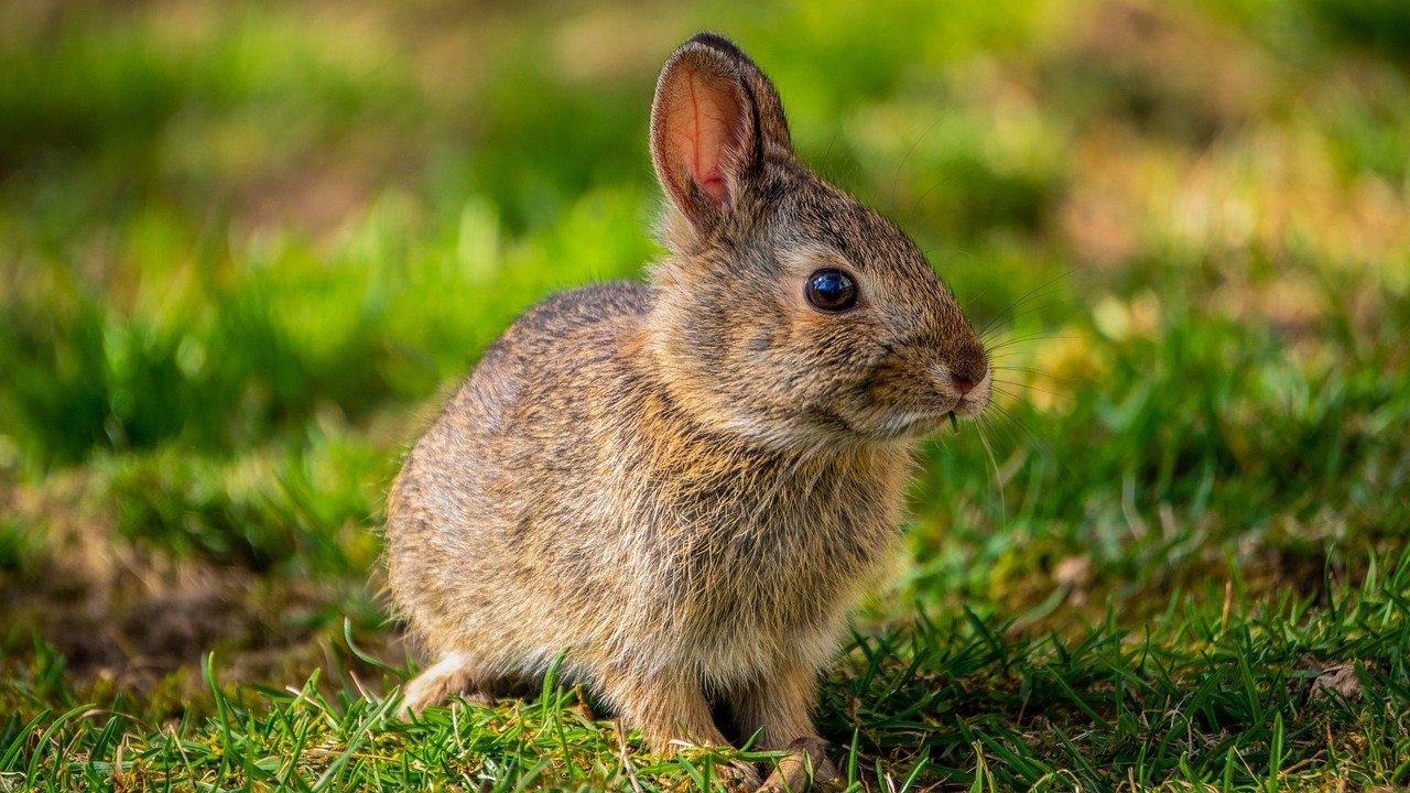 Co oznacza królicze kichanie?