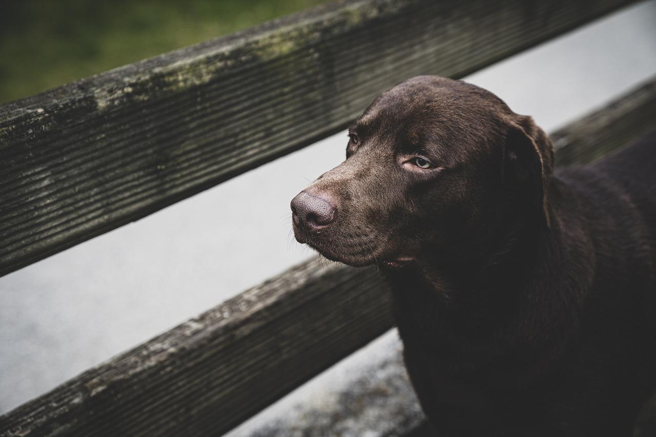 Jakie psy ukochała sobie królowa Anglii?