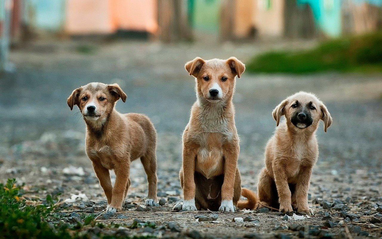 Psie choroby uszu – jak rozpoznać objawy i skąd się biorą?