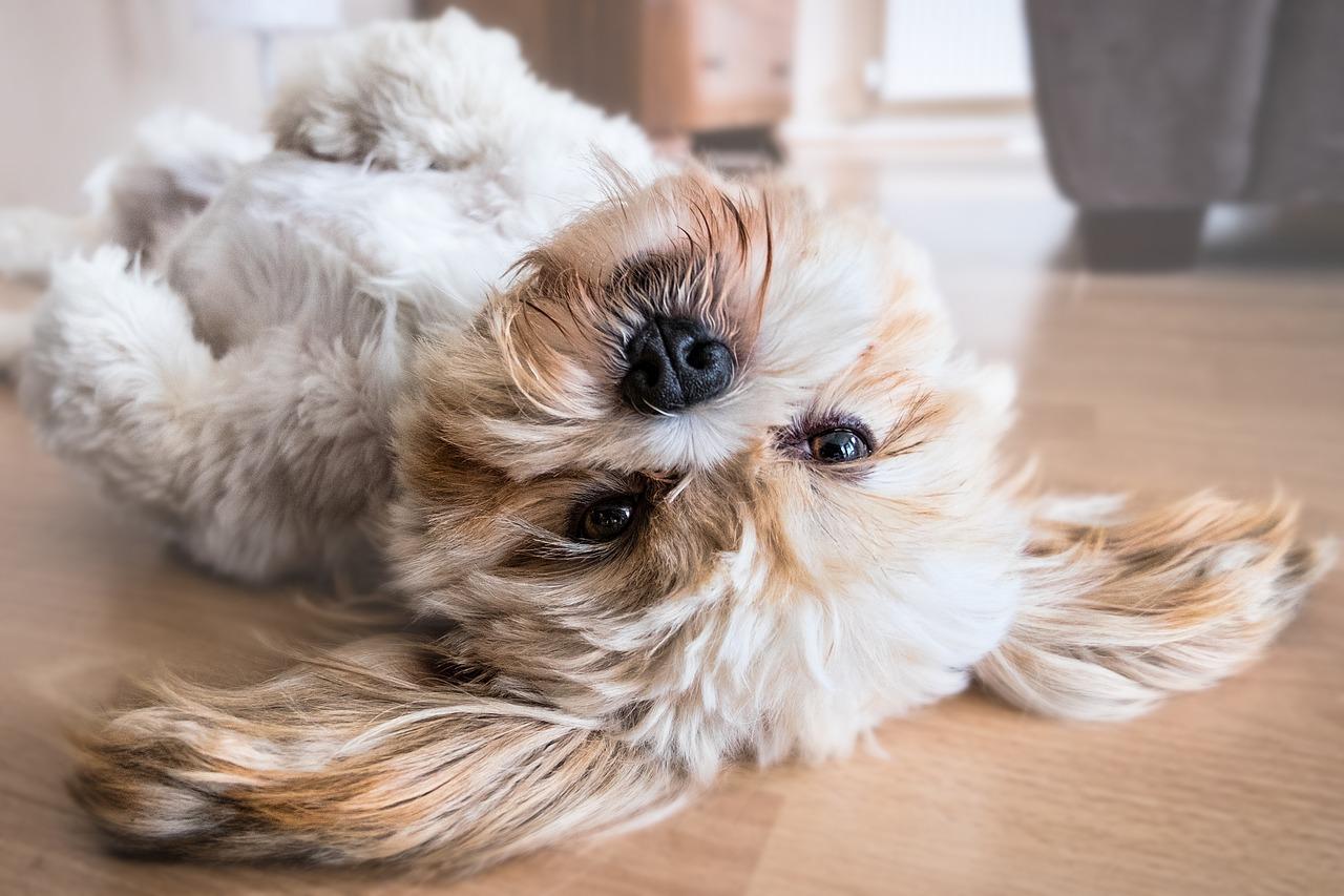 Linienie psa – z czego to wynika?