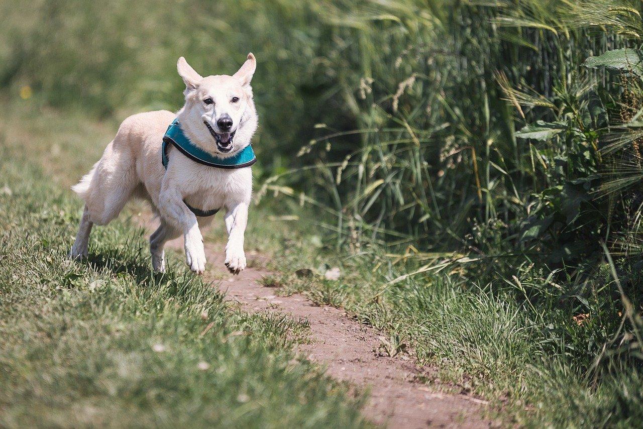 Tor przeszkód dla psa – jak go wykonać?