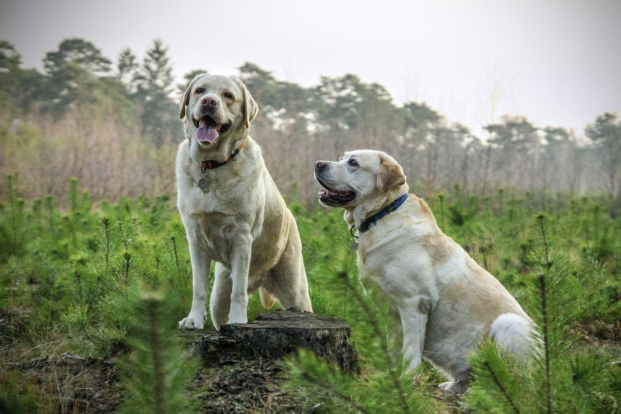 Fajne imiona dla zwierząt – pomysły i inspiracje