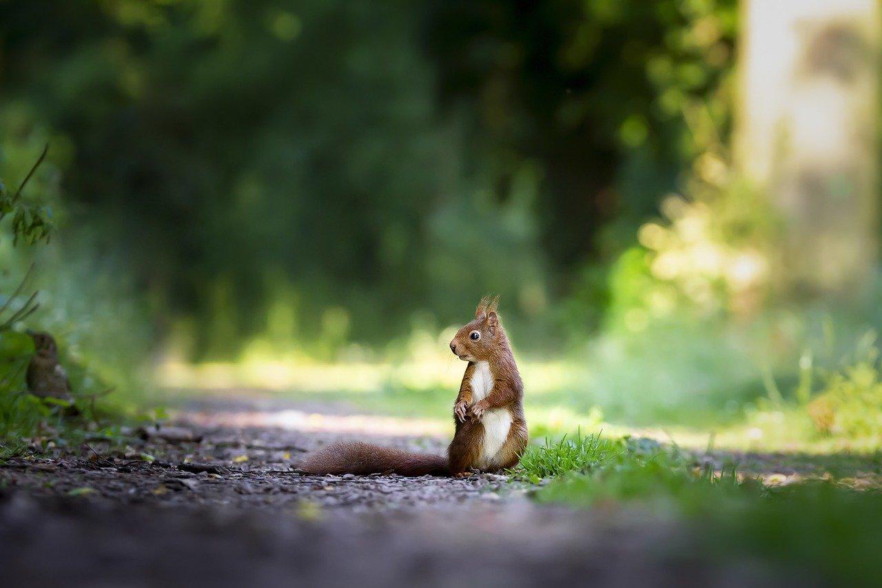 Jakie wiewiórki można spotkać w Polsce?