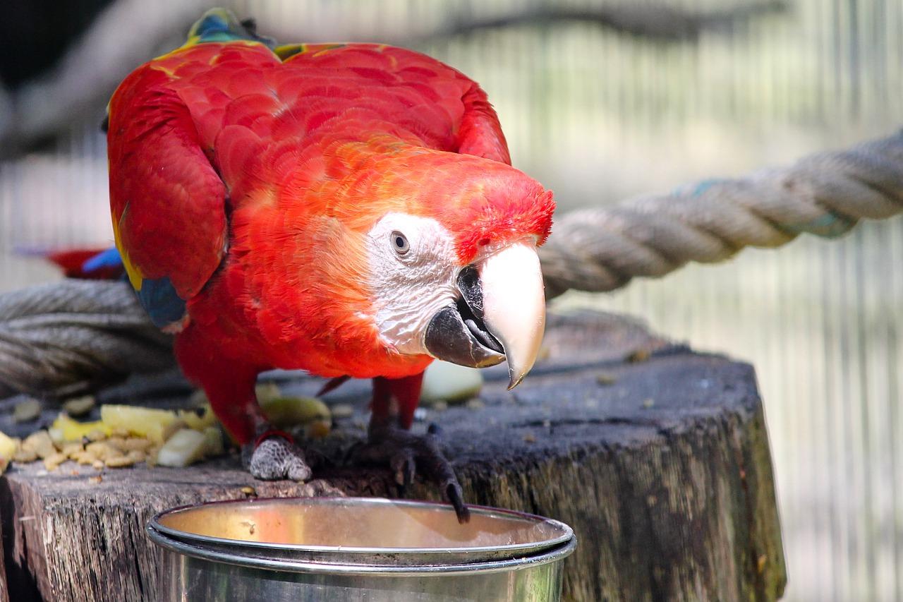 Co powinieneś wiedzieć o wolierze ogrodowej dla papug