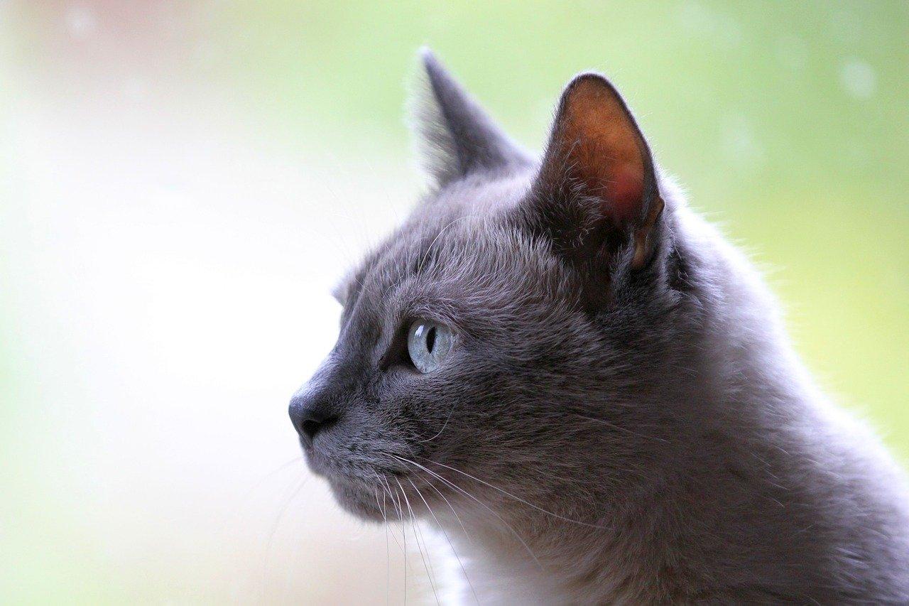 Kot nie chce załatwiać się do kuwety – co robić?