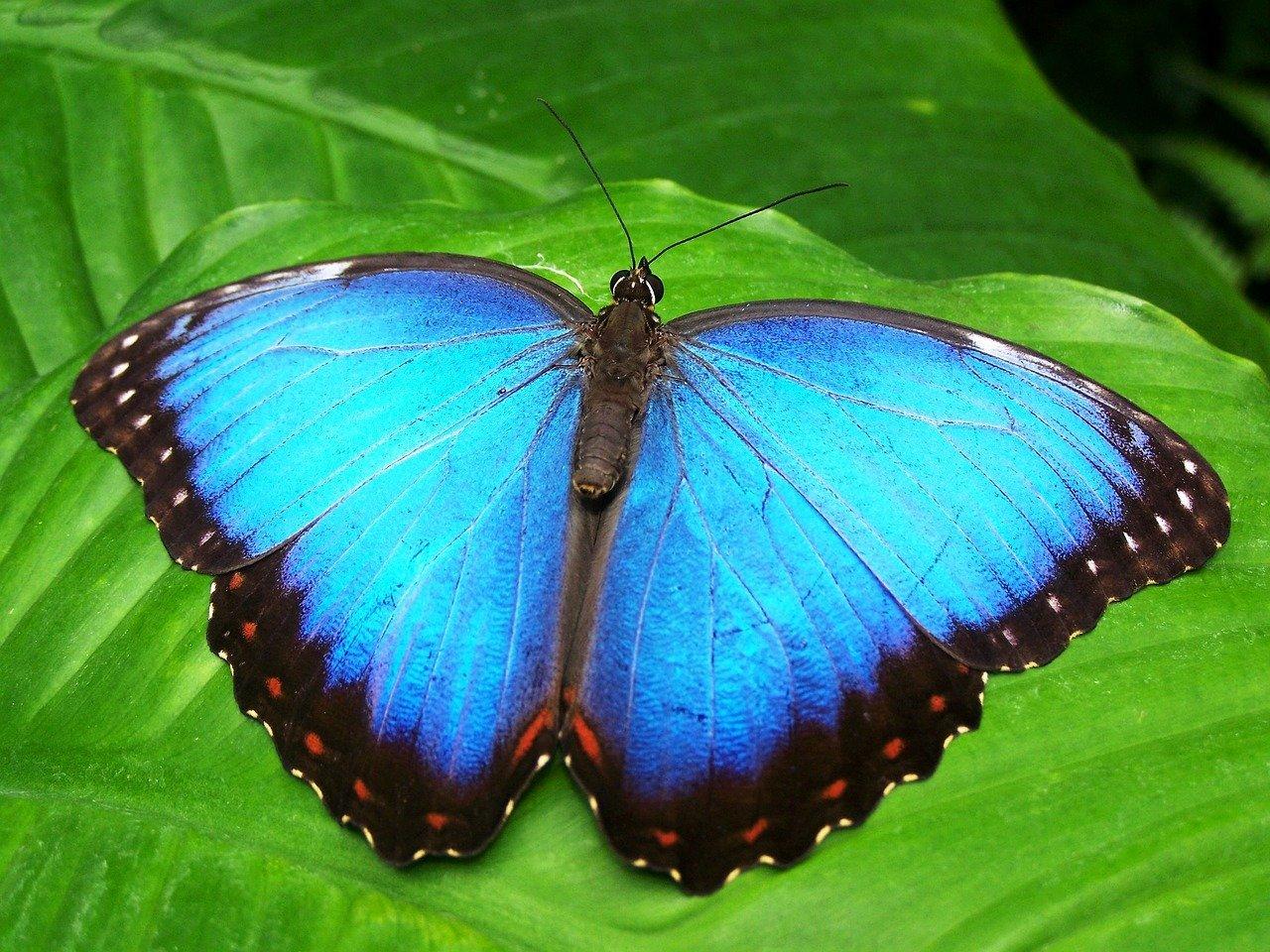 Dolina Motyli – Rodos