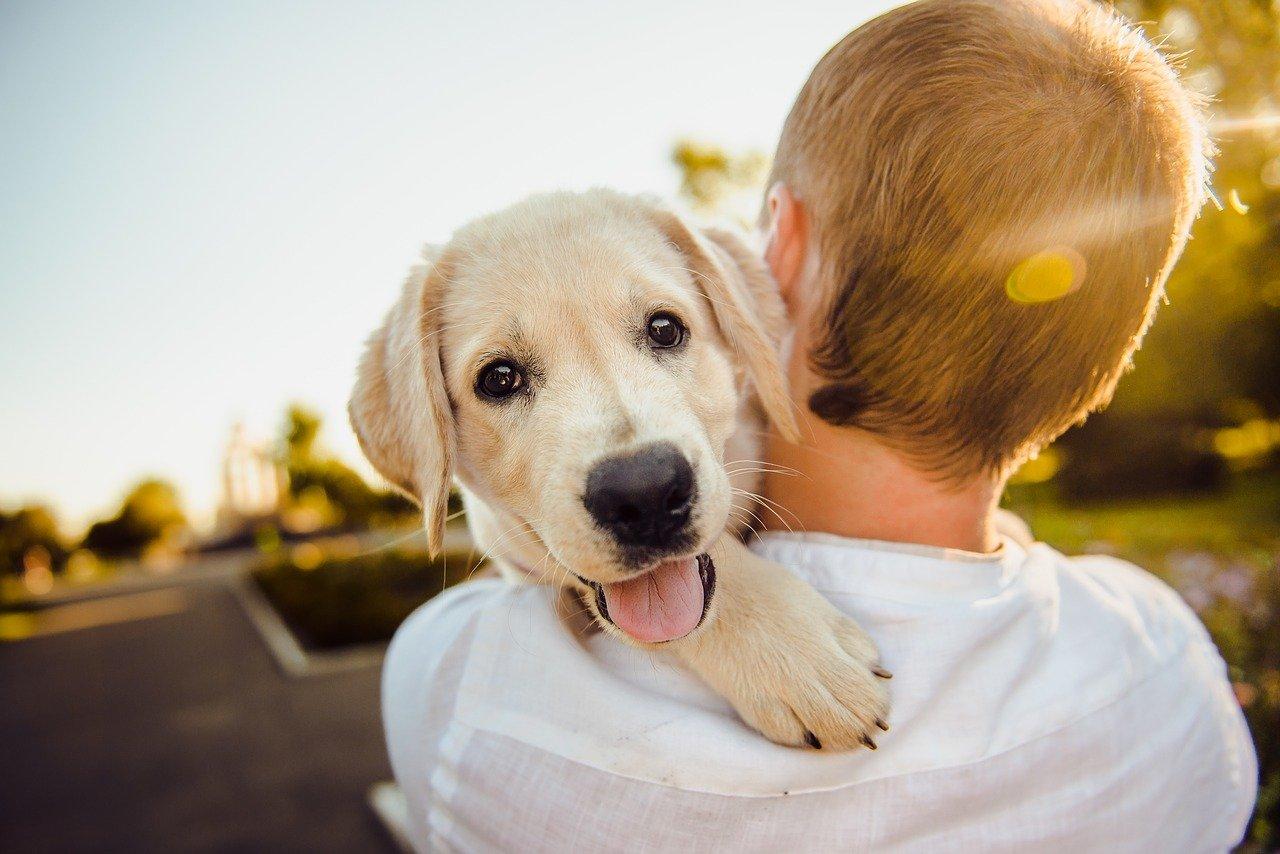 Zapach z pyska psa nie powinien być nieprzyjemny