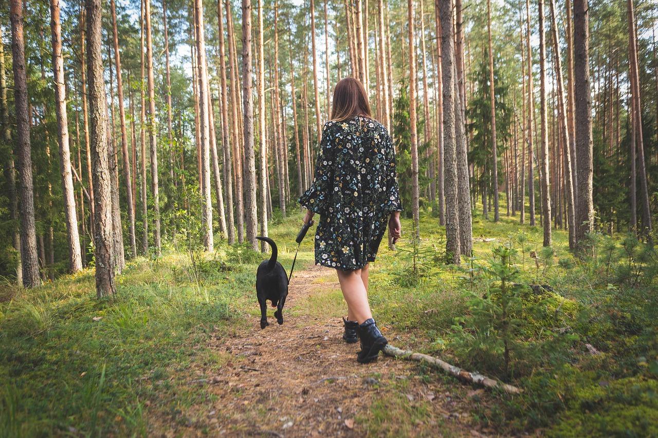 Pies na wakacjach – plaże przyjazne psom i inne ważne sprawy