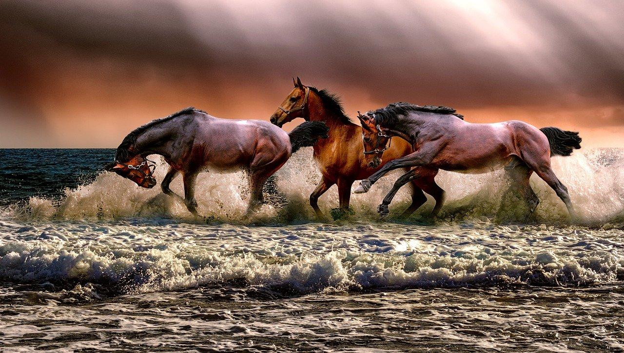 Ceny tych koni są niesamowite! Ile są warte najdroższe konie świata?